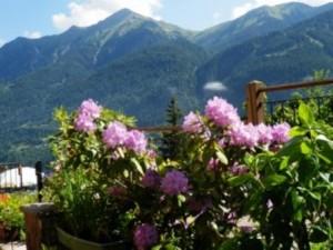 Panorama mit Blumen